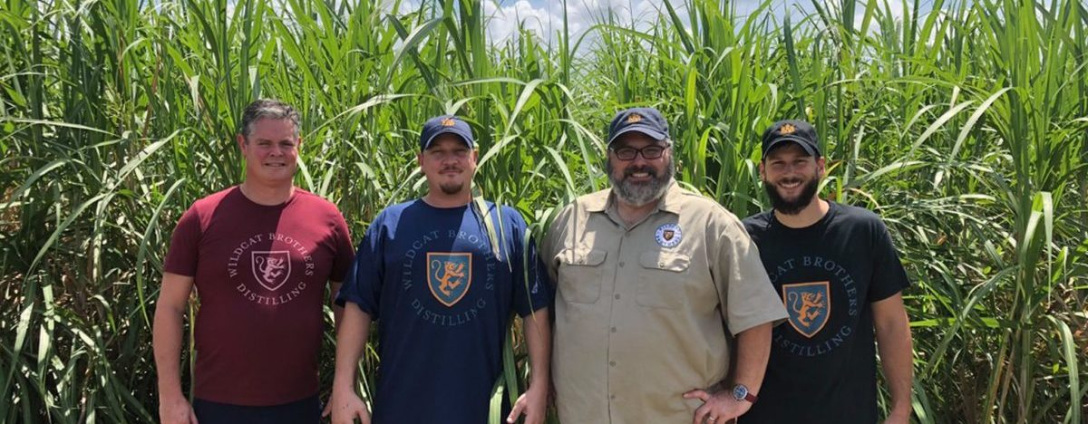 WB management in the sugarcane field
